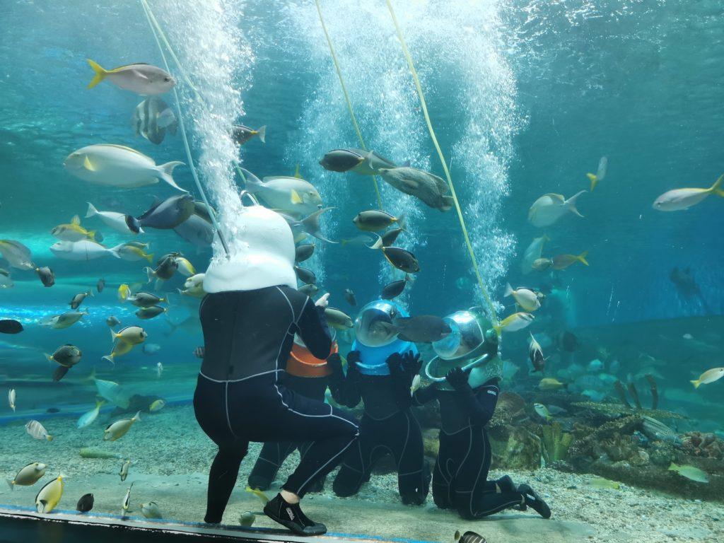 Nu rata OCEANARIUM în Manila!